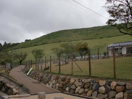 若草山の写真